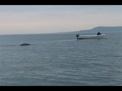 Quay Được Quái Vật Hồ Loch Ness tại Ireland | Khoa Học Huyền Bí