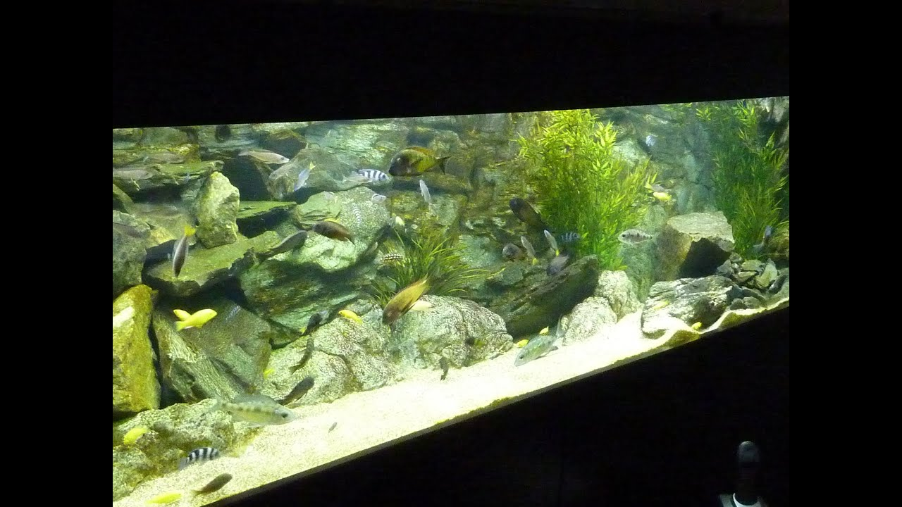 Tanganyika Fish Tank Aquarium - YouTube