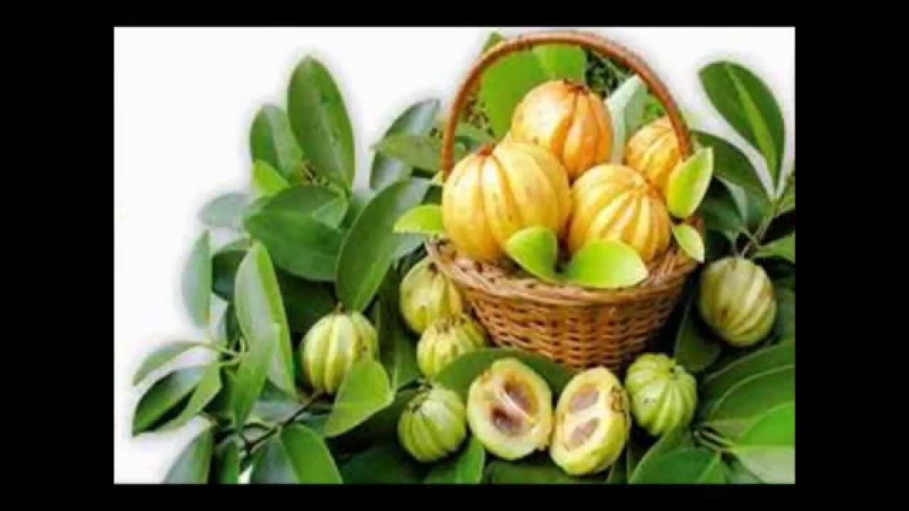 cambogia fruit images