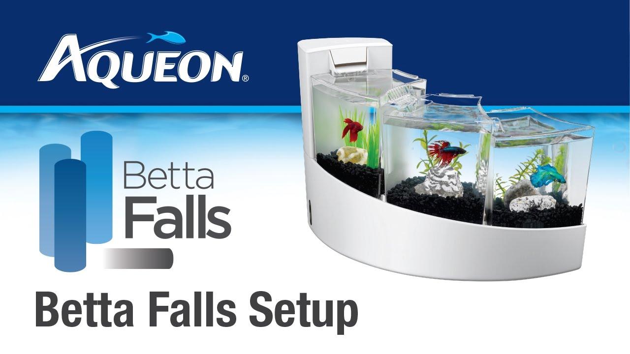 Aqueon betta falls set up youtube for How to setup a betta fish tank