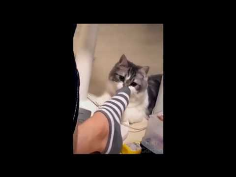 Try not to laugh, funny animal moments