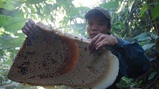 Mật ong rừng 2017: Chinh chiến với ong rừng mà không cần ngụy trang
