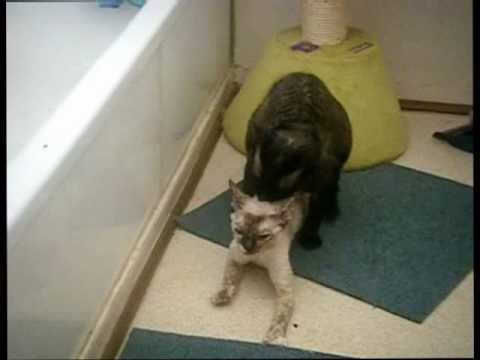 Cats Mating Hard Hqdefault.jpg