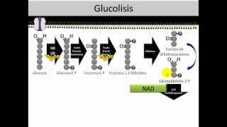Bioquímica - Óxido Reducción parte 2 - Glucólisis