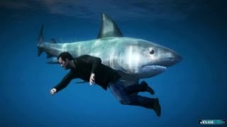 GTA 5 Gameplay : How to find the SHARK !