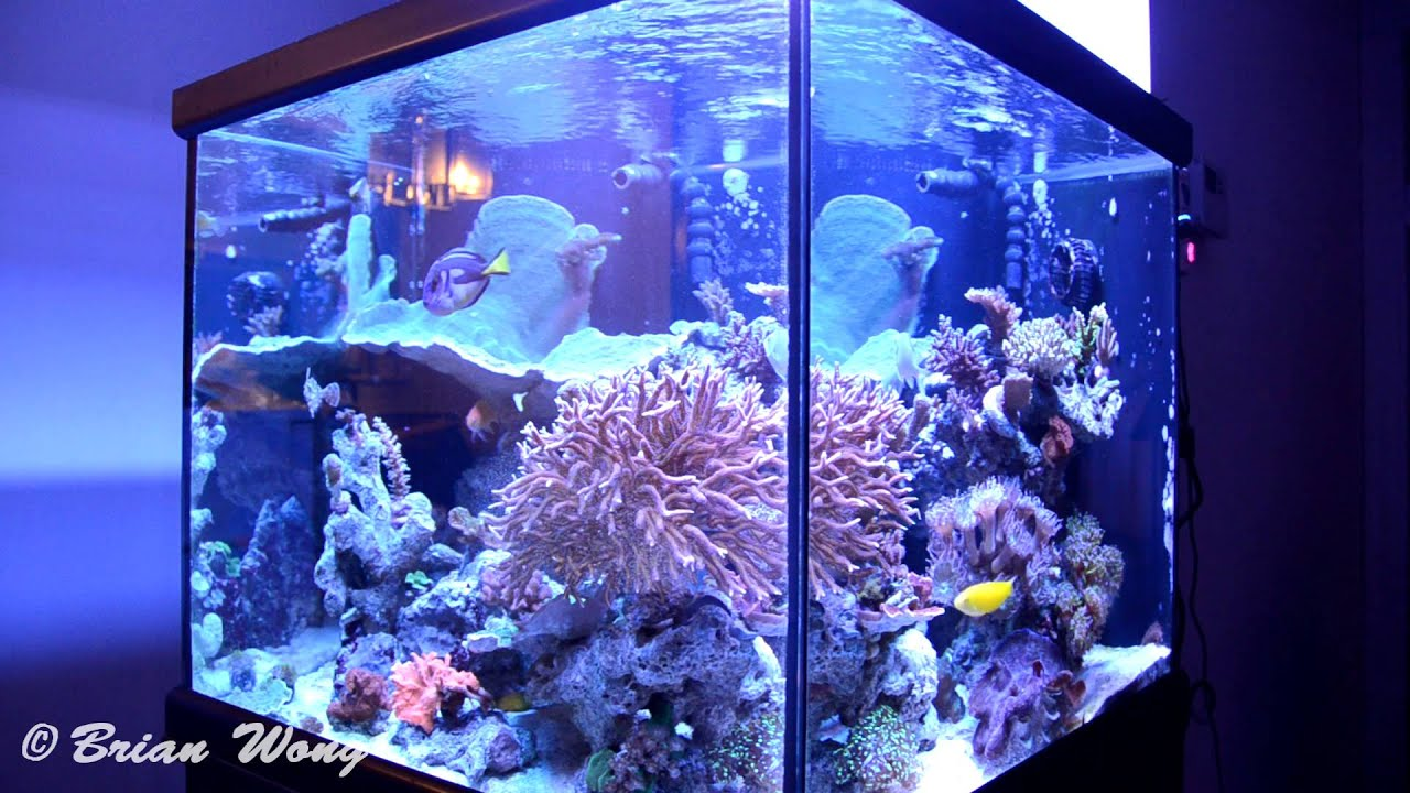93g Reef Ready Cube Aquarium Salt Water Tank Hd Youtube