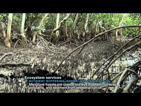 MangroveWatch Great Barrier Reef - A Start Some Good Project