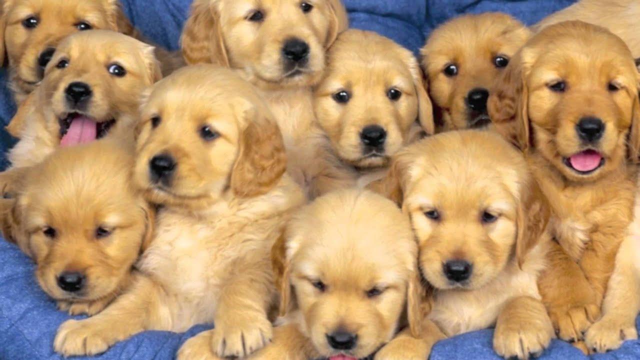 Raccolta foto cuccioli di cani youtube - Cane da colorare le pagine libero ...