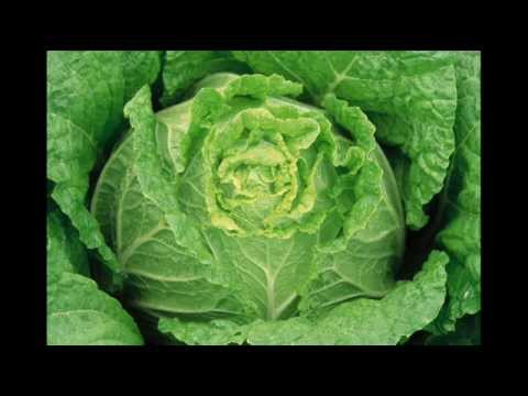 Good Organic Gardening Tips for Vegetables; Hydroponics Growing System