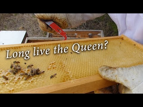 Beekeeping: Can we save the split?