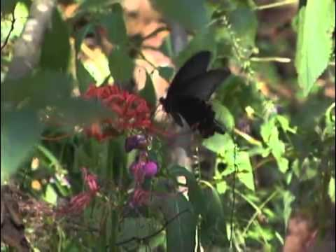kineticvideo.com - Creature features butterflies 15670