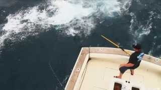 Crazy Shark Fishing