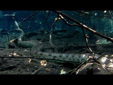 Anaconda, sport float in rio da prata, Jardim, Mato Grosso do sul,