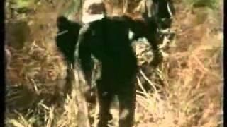 Huge Anaconda Snake Eat Mans Leg And He Survives