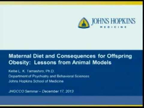 Maternal Diet and Consequences for Offspring Obesity