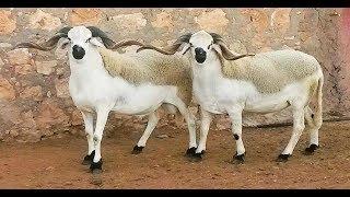 الحصاد اليومي.. عيد الأضحى بالمغرب في هذا التاريخ |
