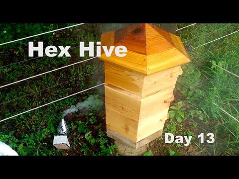HexHive Beekeeping Day13