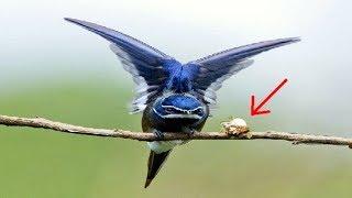 Tổ chim siêu nhỏ trên cành