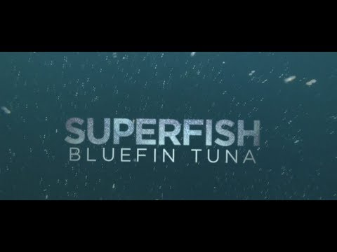 "Rick Rosenthal on Filming ""Superfish: Bluefin Tuna"" 