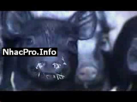 NhacPro Info   Lang Nghe Giai Dieu   Ket Noi Trai Tim   #Play 5084 Phim Con Heo   Cam Tre Em Duoi 18 Tuoi vip
