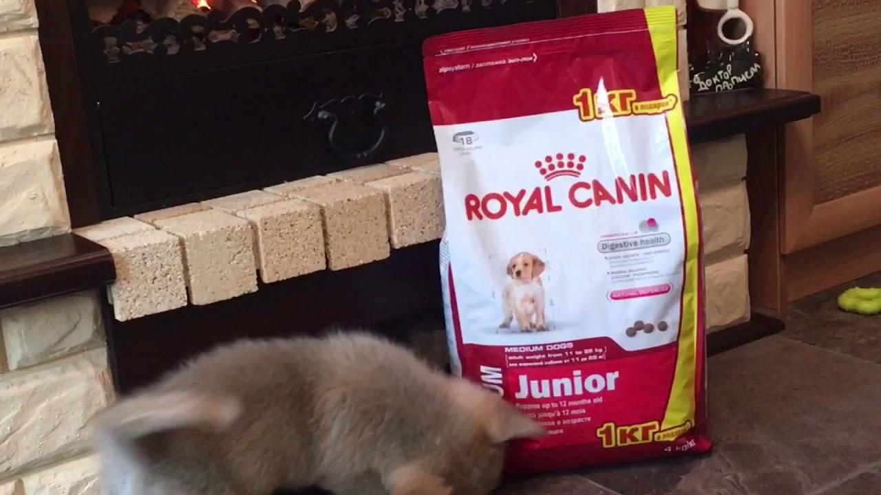 Корм для кошек Fitmin For Life: отзывы и разбор состава