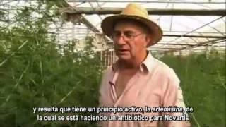 Josep Pamies. La estevia y otras plantas medicinales view on youtube.com tube online.