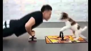 Perro ejercitandose con su amo