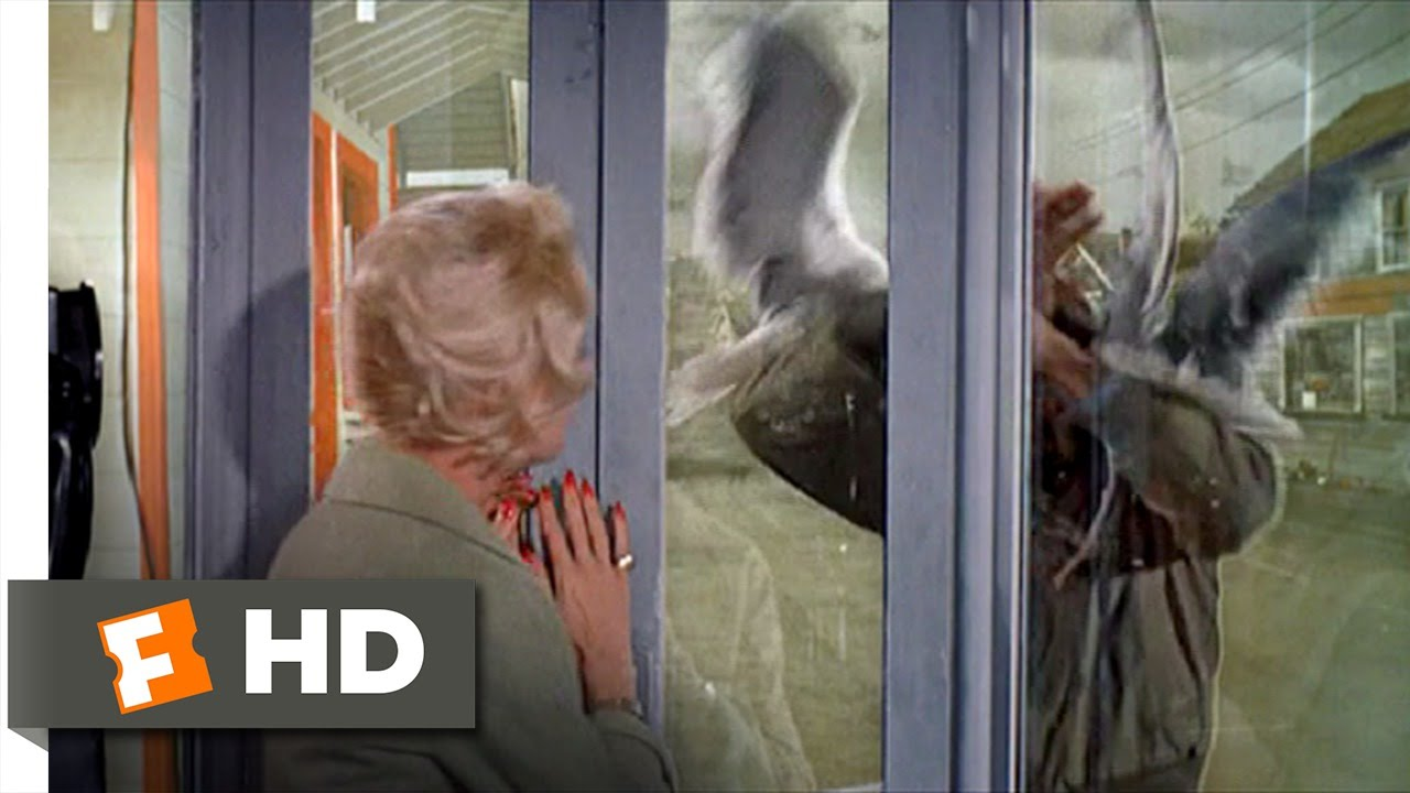 The Birds 8 11 Movie Clip Trapped In A Phone Booth