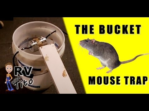 the best mouse trap the bucket trap youtube. Black Bedroom Furniture Sets. Home Design Ideas