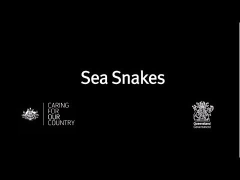 Fishers' guide to handling bycatch: Sea snakes