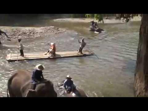 Thailand, Tajlandia, podroze po swiecie, Golden Triangle, elephants, slonie