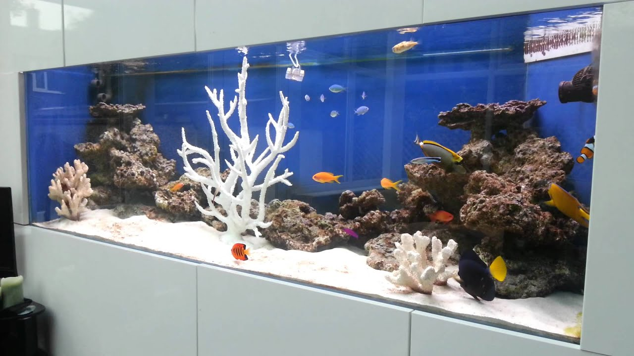 saltwater fish only aquarium with tangs angelfish clown