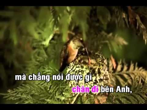 Gặp nhau giữa rừng mơ Karaoke