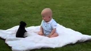Lucha entre perro y bebé