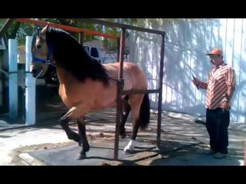Hình ảnh trong video Caballos Bailadores, Azteca de David Gonzalez
