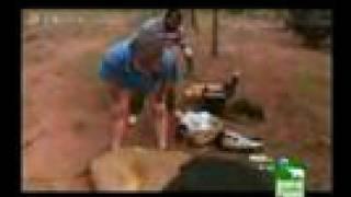 Lion Attack Car (Safari Videos)