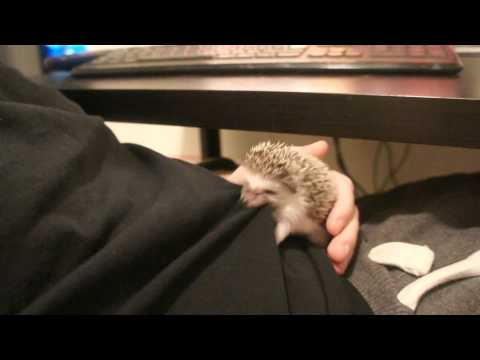 Hedgehog Vs. Shirt