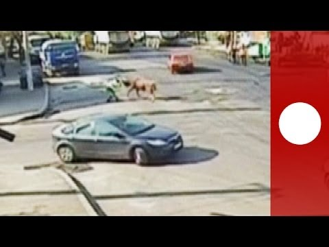 Thumbnail of video Bull attacks traffic warden  in Romania