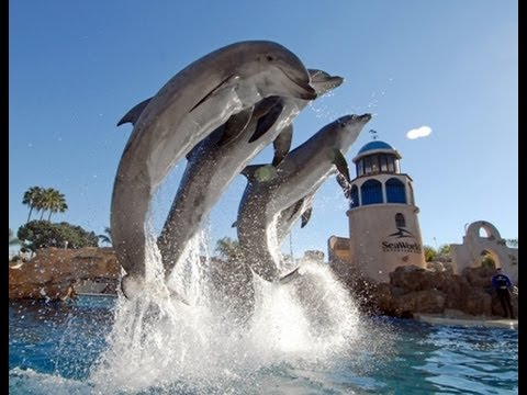 "♥♥ SeaWorld's Old ""Dolphin Discovery"" Show (in HD)"