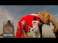India villagers knit jumbo jumpers to keep elephants warm