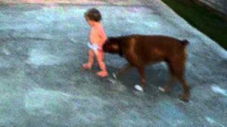 El bebé y su perro boxer
