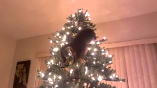 Gato tumba hermoso arbol de navidad
