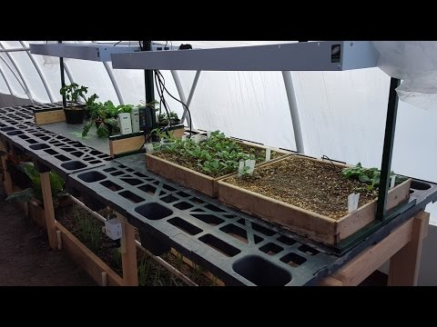 $27 Greenhouse Seedling Table Design & Tomato Plant Sale