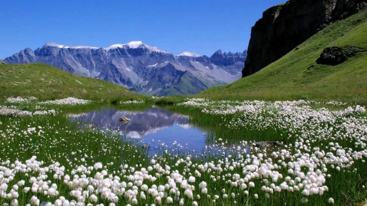 Les plus beaux paysages du monde youtube - Les plus beaux arbustes persistants ...