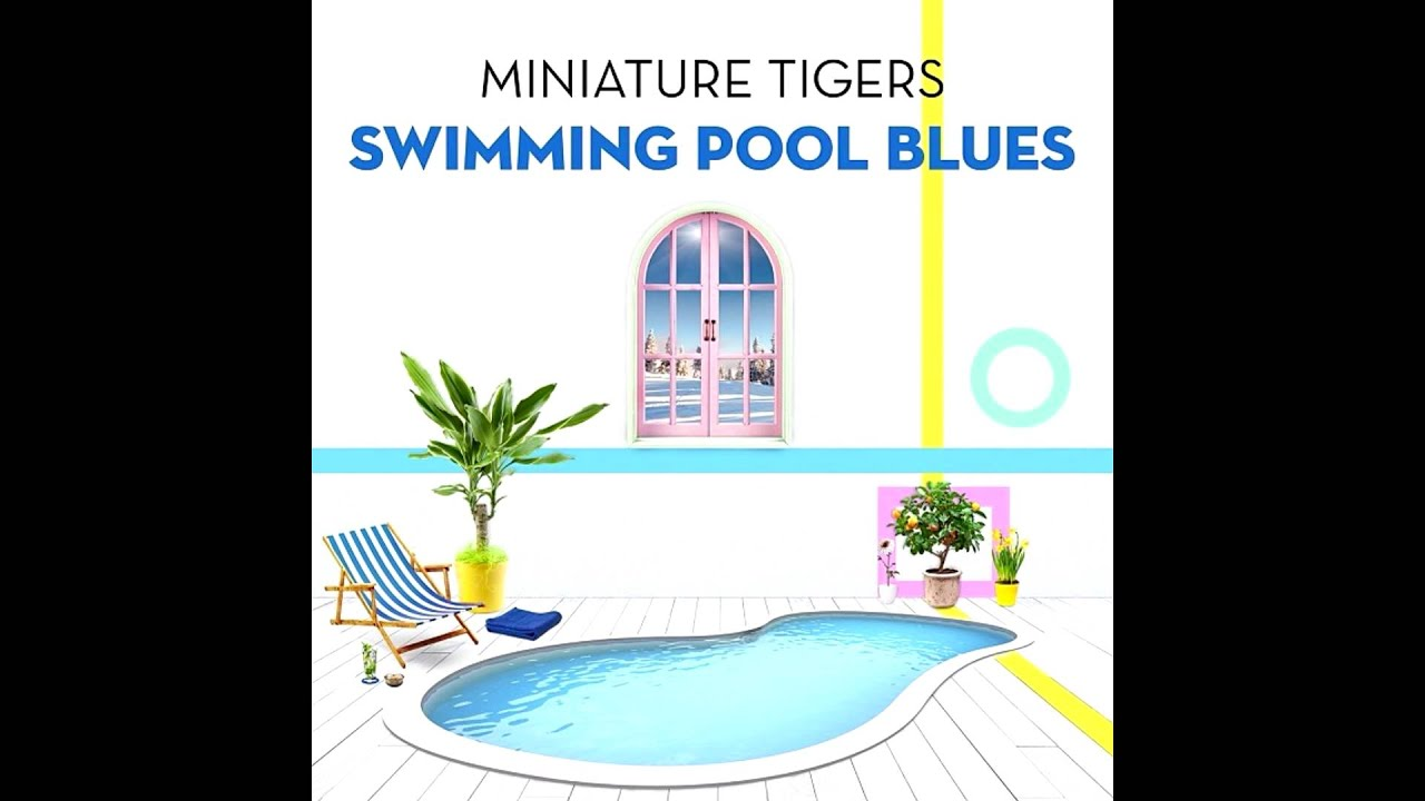 miniature tigers swimming pool blues youtube