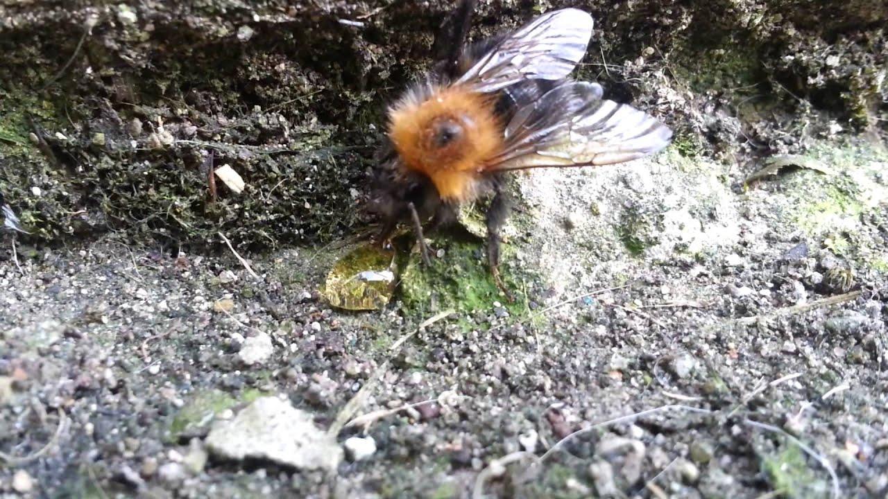 Sauvetage d'une abeille