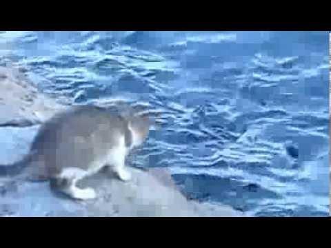 Ai Mang Cá Đến Cho Con Mèo Hoang Tàn Ác !