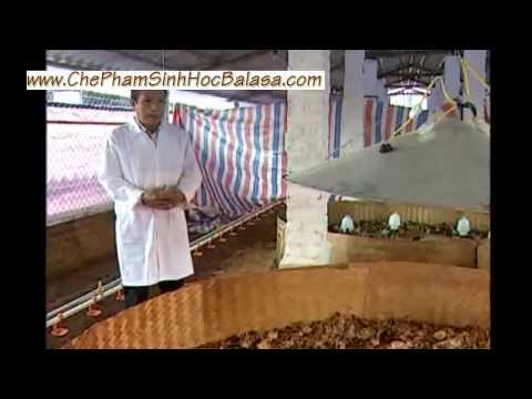 Hướng dẫn cách làm đệm lót sinh học úm gà con {www.chephamsinhhocbalasa.com]
