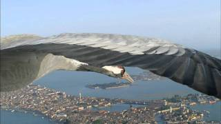 Earthflight: Common Cranes Fly Over Venice