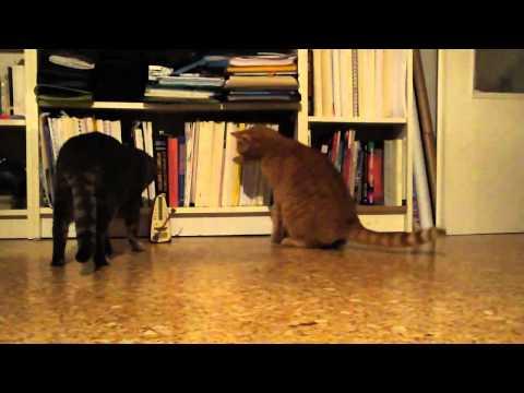 Ta kočka má rytmus jako blázen:D